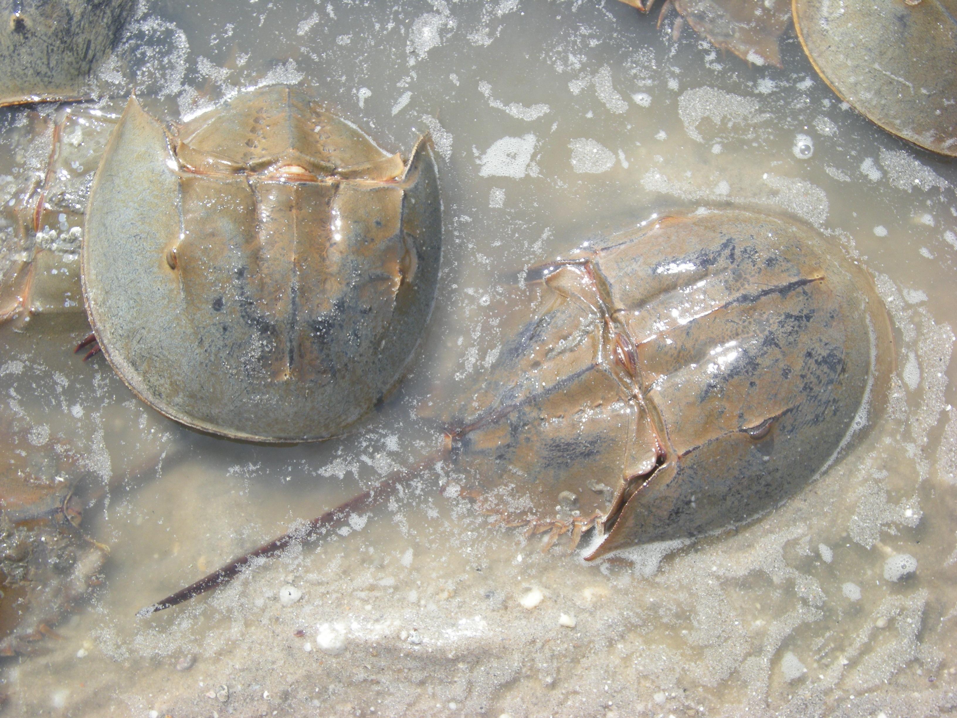 Birds Crabs 22 May 2010 007