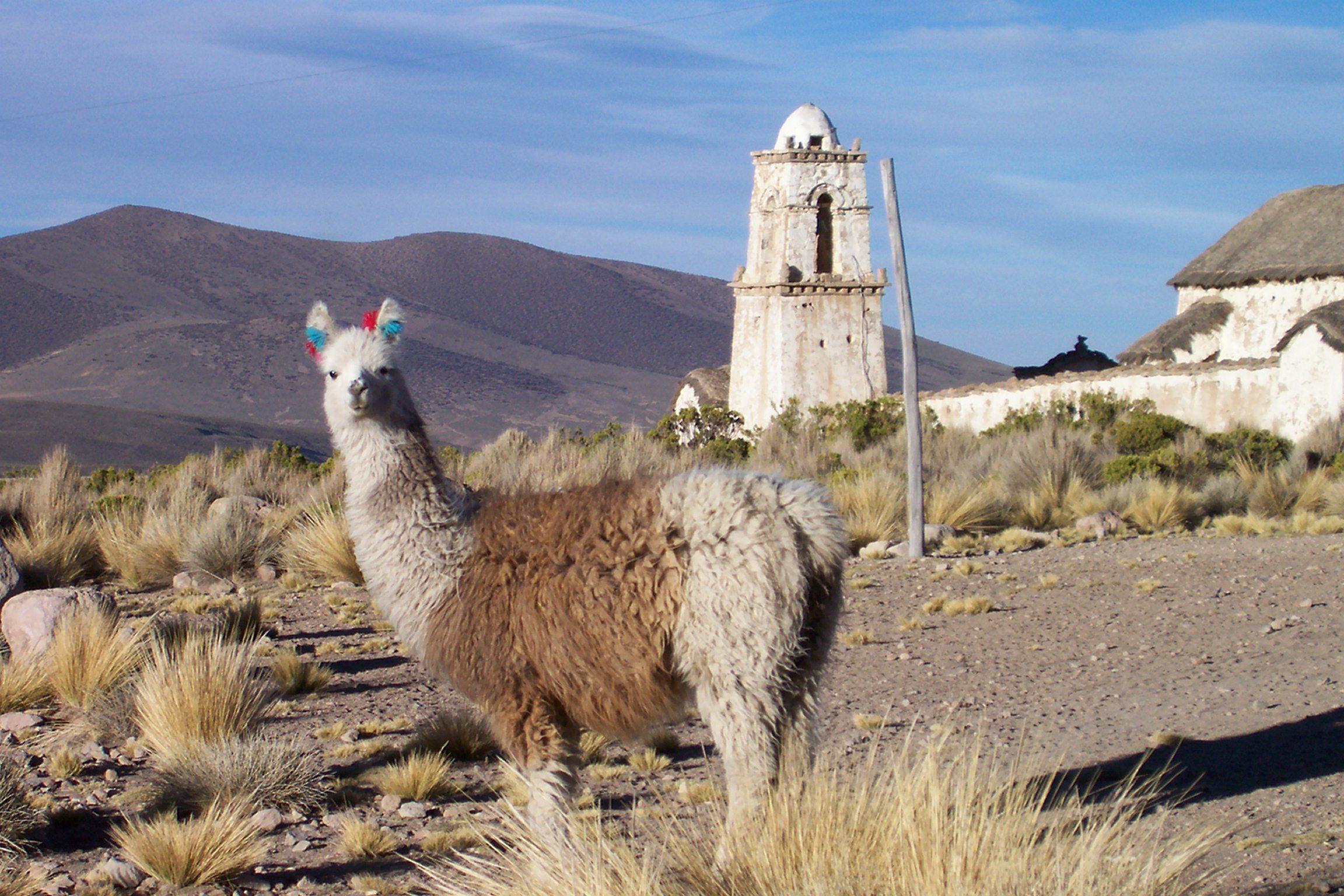 Bolivia June08 All Photos 096