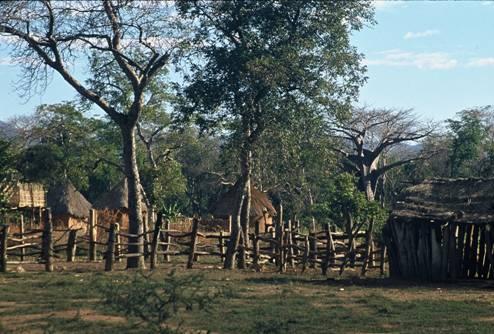 Muzarabani Forest