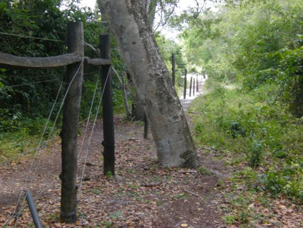 Bruce Byers Consulting Arabuko Sokoke Forest