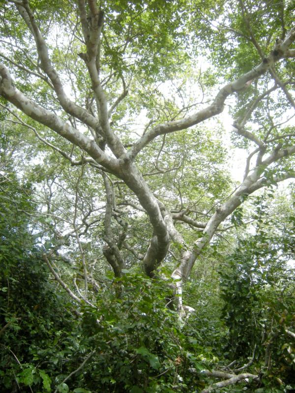 Bruce Byers Consulting Arabuko-Sokoke Forest