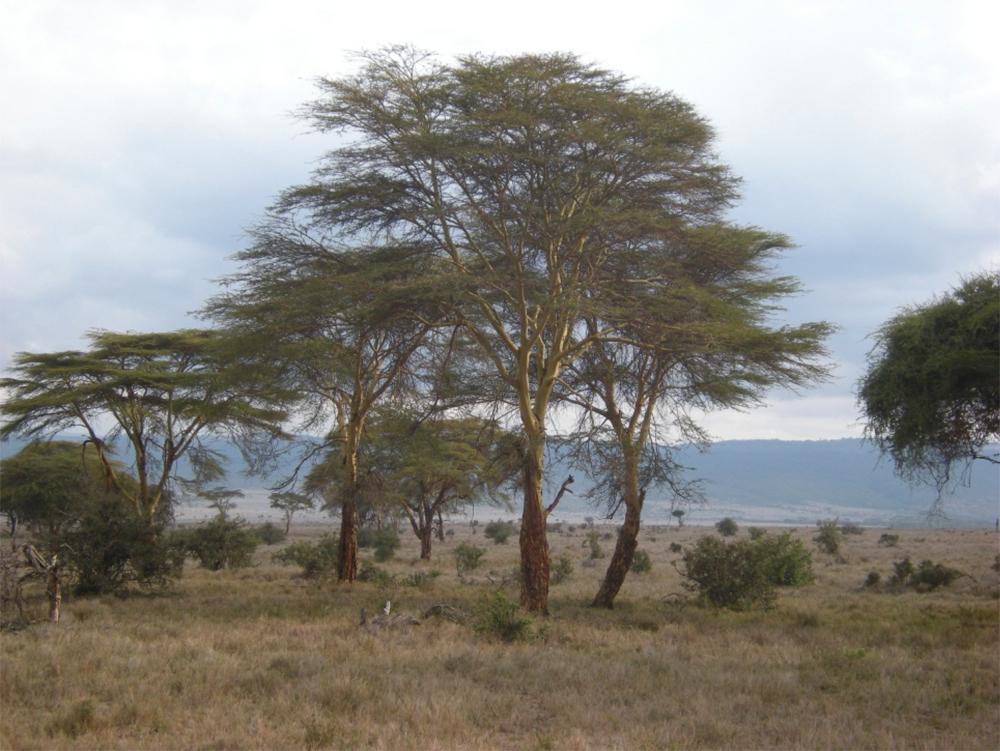brucebyersconsulting_kenya14