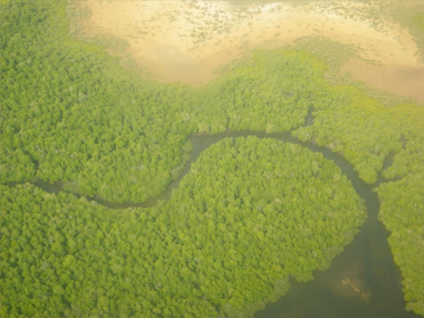 Bruce Byers Consulting Mangroves of Lamu