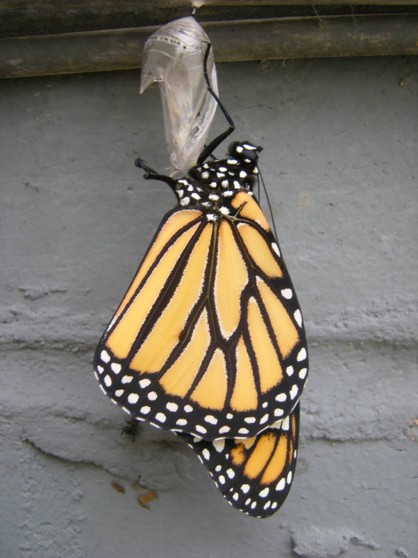 Bruce Byers Consulting Monarch