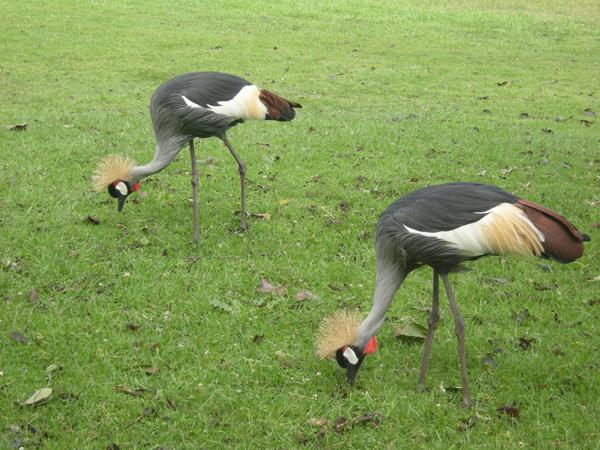 Bruce Byers Consulting Mt. Kenya Lewa Wildlife
