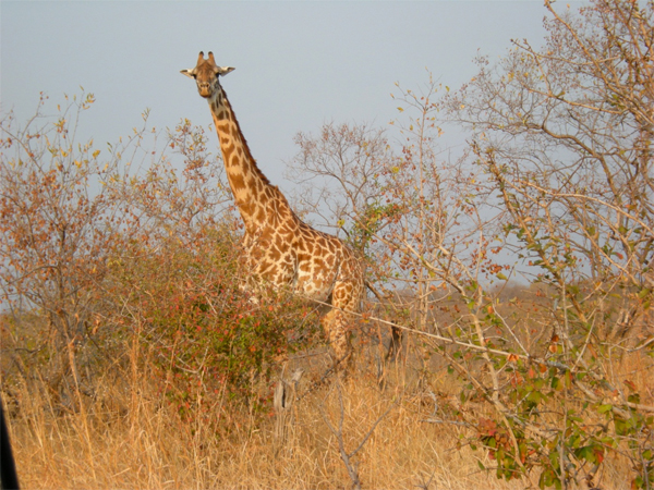 BruceByersConsulting-Great Ruaha6