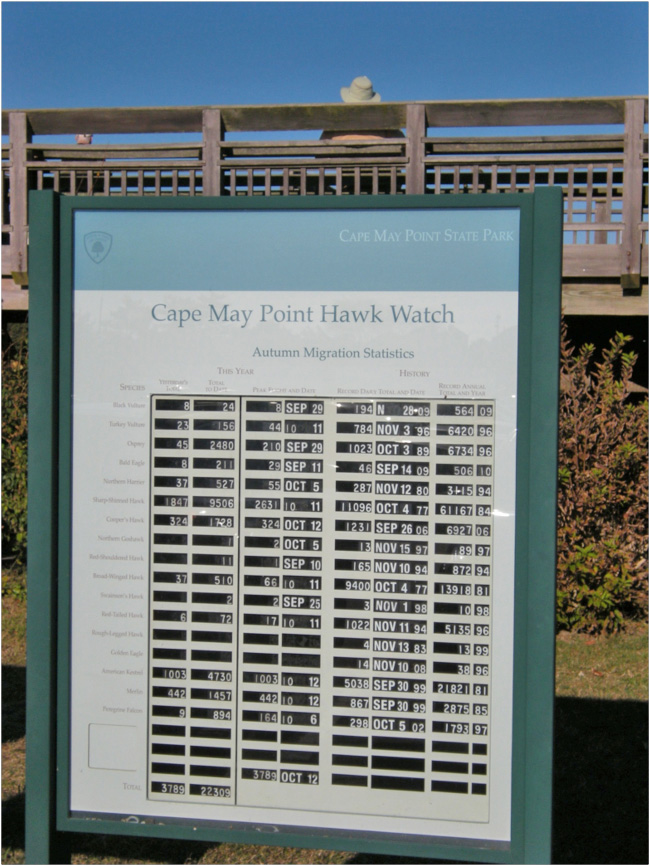 brucebyersconsulting-Cape May Hawks3
