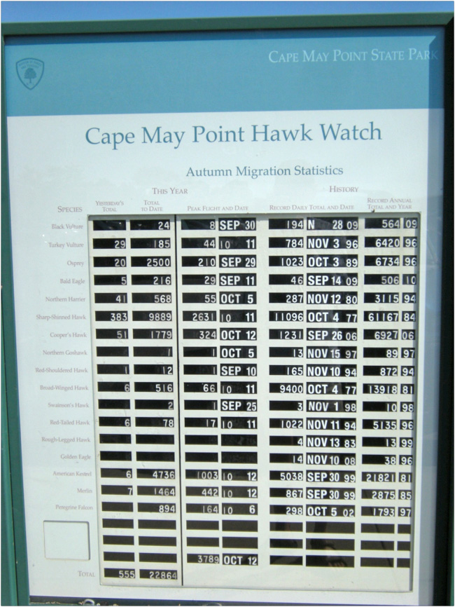 brucebyersconsulting-Cape May Hawks5