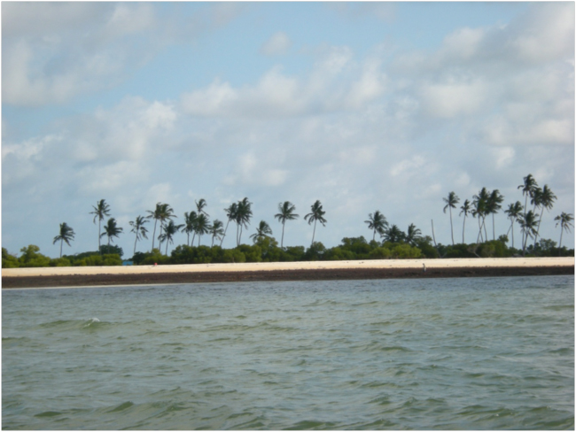 Mangroves in Mozambique2
