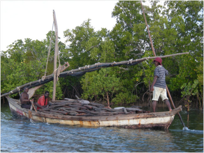 Mangroves in Mozambique4