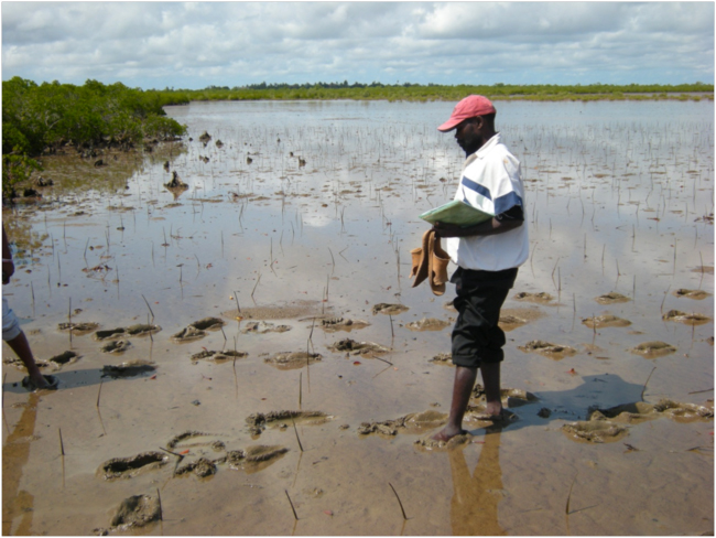 Mangroves in Mozambique6