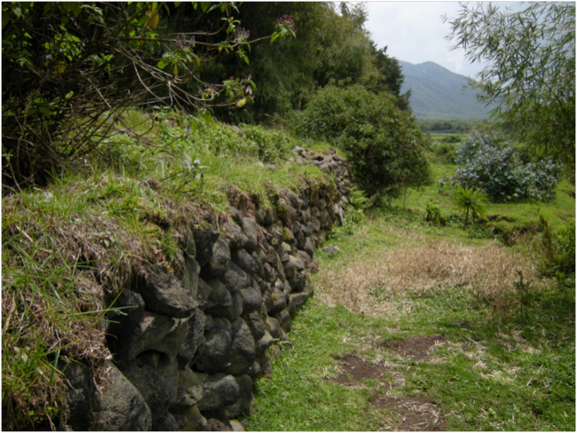 The perimeter wall of Volcanoes National Park above Kinigi Village
