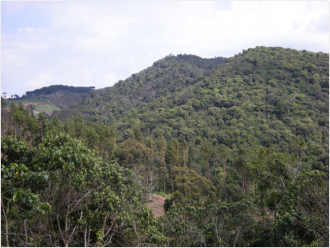First view of the native forest