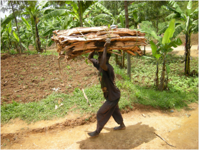 Batwa man carrying firewood bundle
