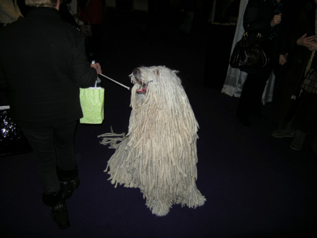 A Komondor at the Westminster Cantina