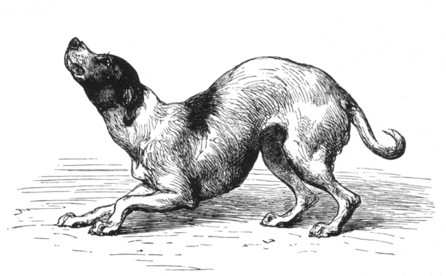 Expression of the Emotions in Man and Animals (1872)
