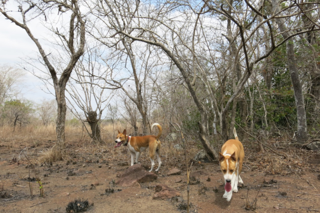 Duka and Lila in the bush, coastal Mozambique                  Photo: J. Guernier