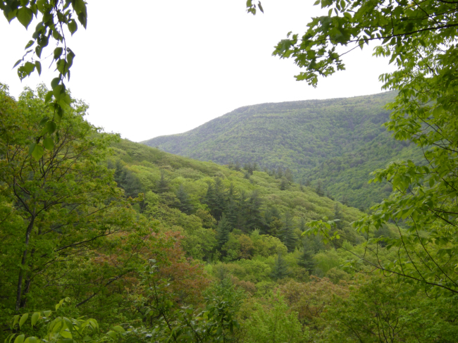 Kaaterskill Clove. May 2015.