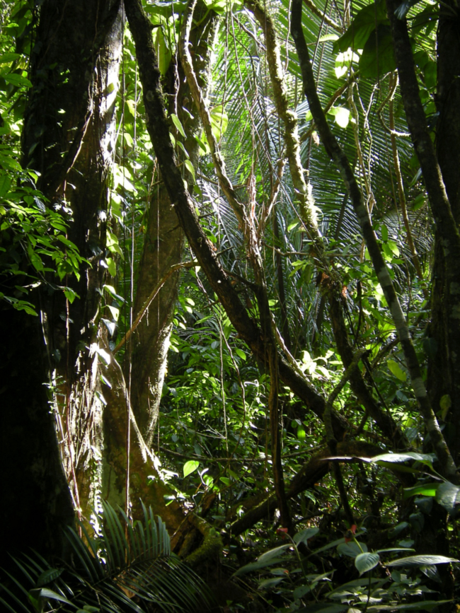 Tropical forest, Belize