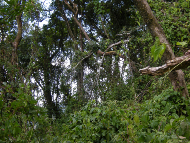 Inside the Zomba Mountain forest