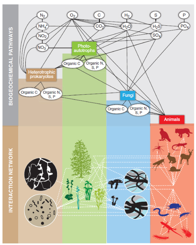 """Figure 2 from Naeem et al., 2012: """"Ecological structure in terrestrial systems. Biodiversity and ecosystem functioning research couples biogeochemical pathways (upper panel) with interaction networks (lower panel)."""""""
