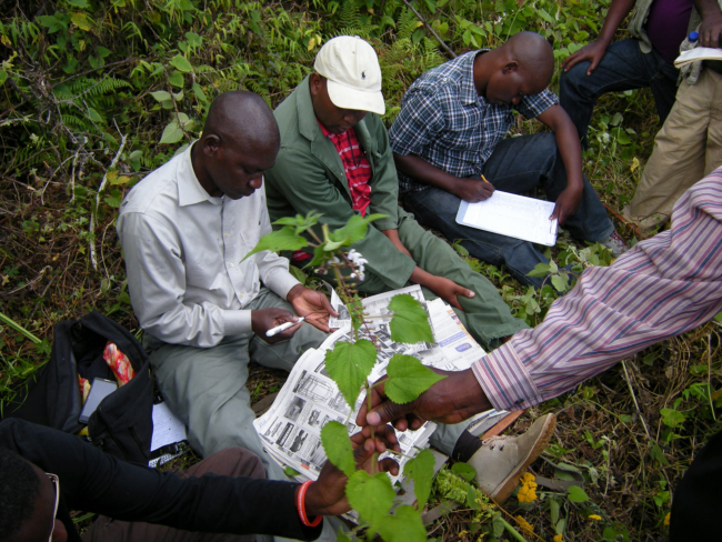 Collecting and pressing plant specimens in the Zomba Mountain forest