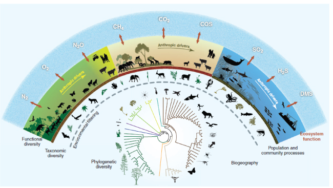 "Figure titled ""Biodiversity and ecosystem functioning in an age of extinction,"" from Naeem et al., 2012. Science."