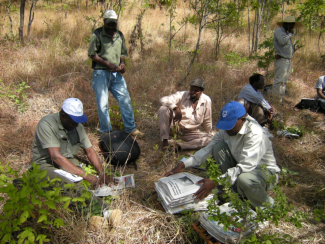 Plant collection at the survey site