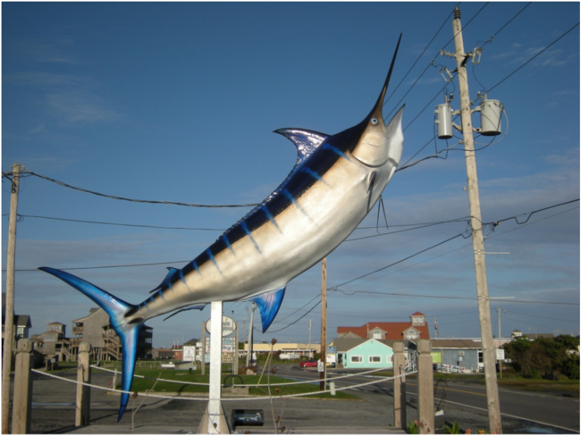 Blue marlin on the loose, Hatteras Harbor