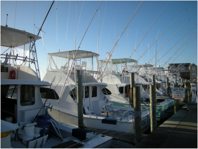 Gulf Stream charter boats, Hatteras Harbor