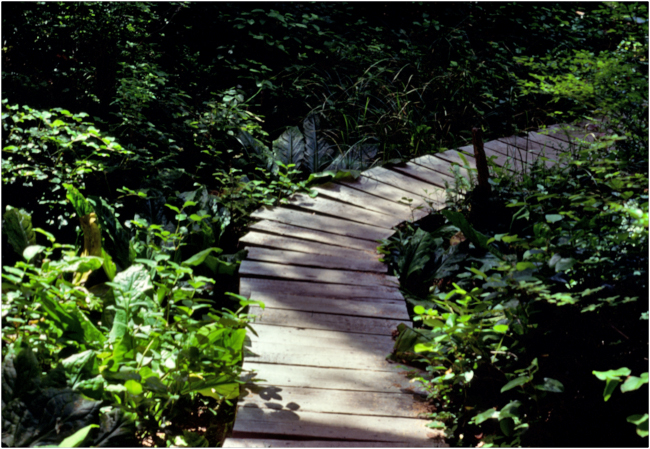 """Stay on the Path!"" Boardwalk trail, Olympic National Park, 1978."