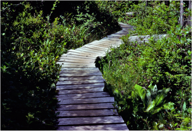 """Stay on the Path!"" Boardwalk trail to Cape Alava from Ozette, Olympic National Park, 1978."