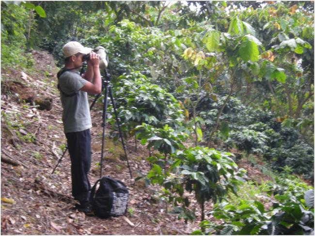 Lester looking for birds in the shade coffee area above El Vesubio