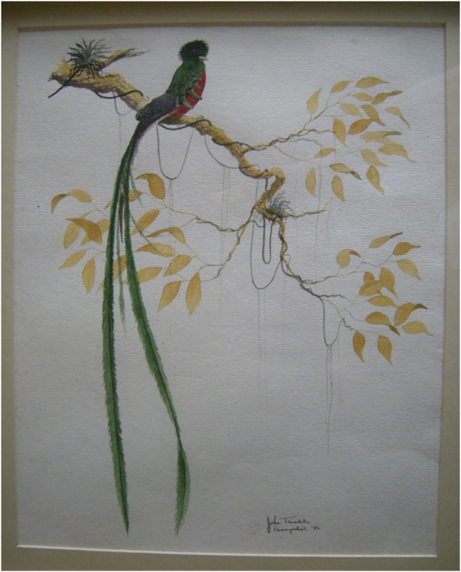 Painting of a Resplendent Quetzal in the old house at Finca Los Tarrales