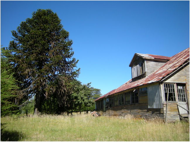 John Hunter's old house from the back, with a planted Araucaria