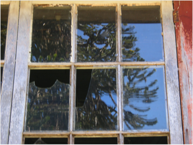 Reflection of the Araucaria in yard of John Hunter's old house