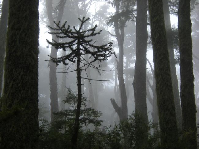 Return through the fog