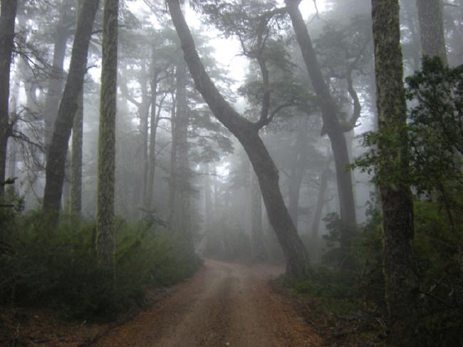 Nahuelbuta road