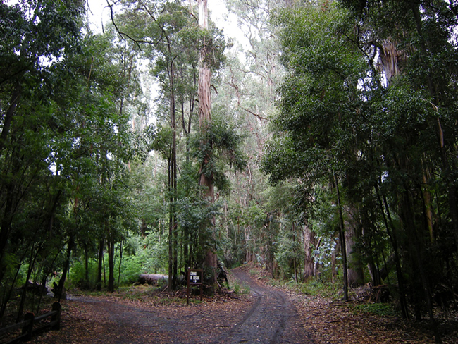 Road into Federico Albert's forest