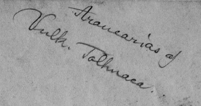 Caption on the back of the photo of Araucarias given to Muir at the Botanical Gardens in Santiago in November, 1911.