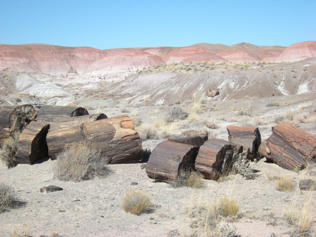 Fossil tree, Petrified Forest National Park, Arizona
