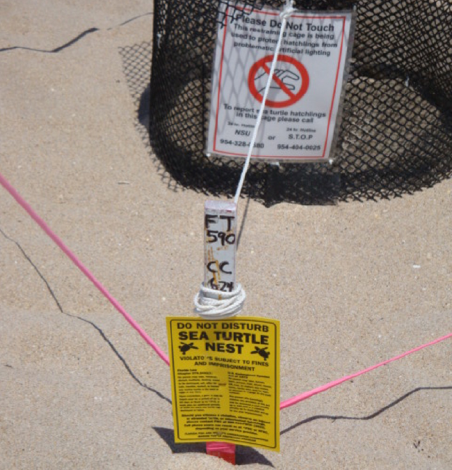 Protected sea turtle nest, Fort Lauderdale Beach (Photo: S. Bunsick)