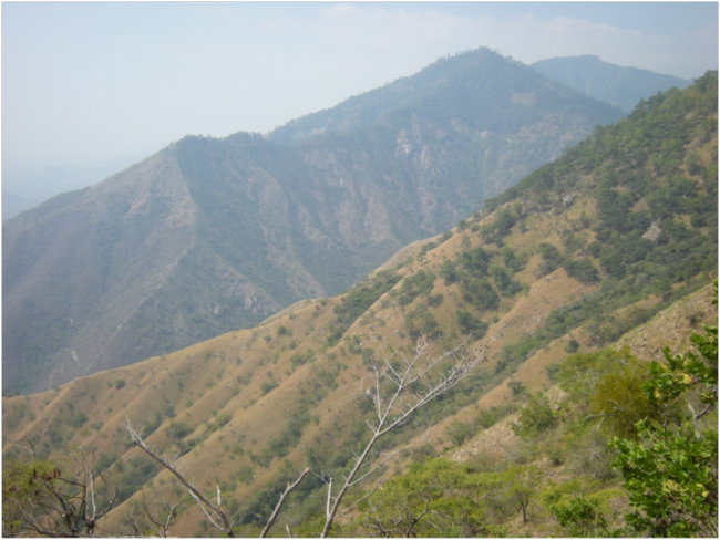 View of vegetation on the lower south-facing slopes of the Sierra de las Minas