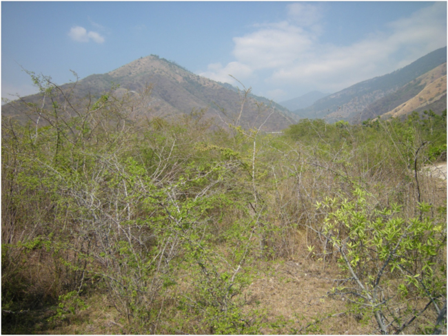 Thorn scrub (monte espinoso) in the lower watershed of the Río Teculután, Motagua Valley