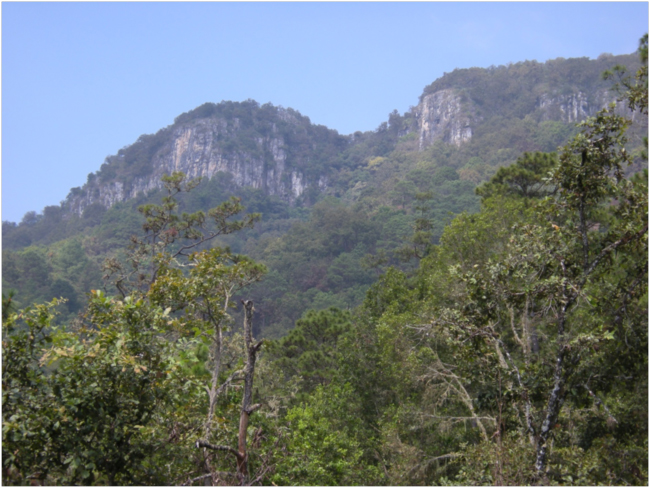 Looking up at the marble cliffs of the Sierra de las Minas in the pine-oak zone