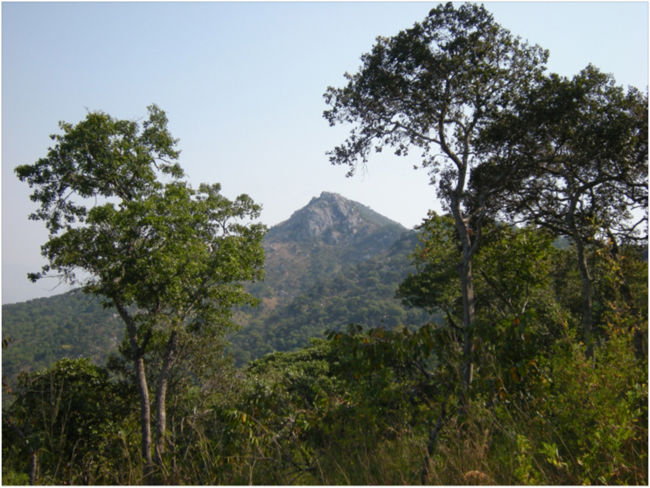 View from Chikala Hill, Liwonde Forest Reserve
