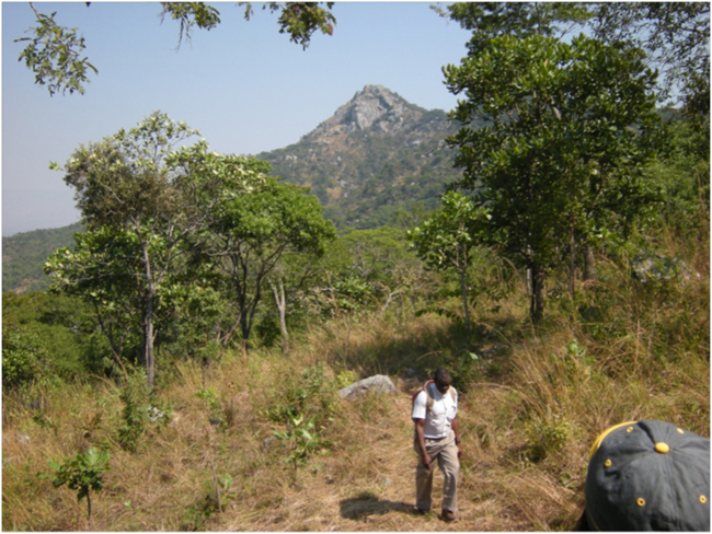 Hiking to the Chikala Hill regeneration potential test site