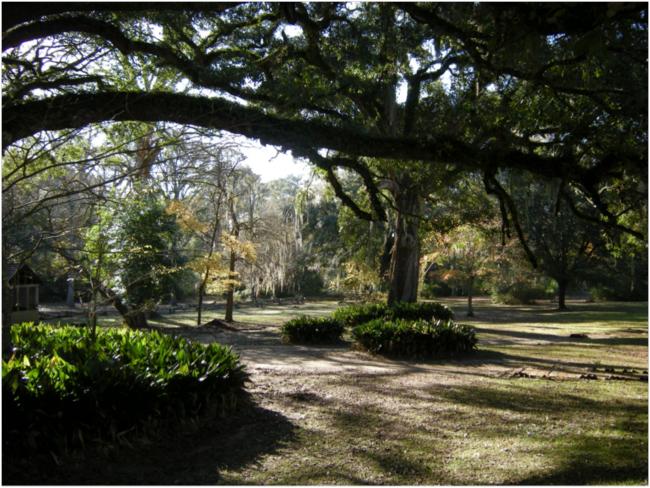 Oakley Plantation grounds
