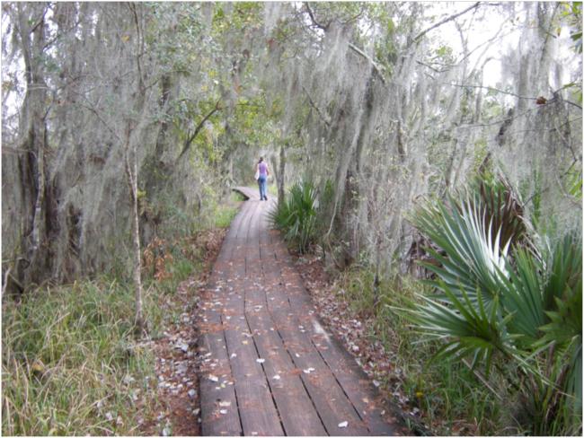 Boardwalk on the Bayou Coquille Trail, Barataria Preserve