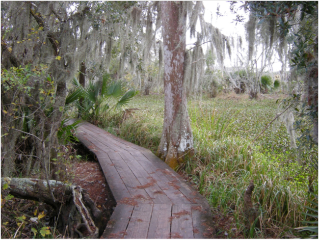 Stay on the path! Barataria Preserve